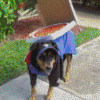 Dog delivering pizza.png